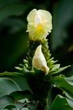 Flora en Parque Historico, cultural y Imagen de archivo