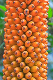 Flora en Tailandia Imagen de archivo libre de regalías