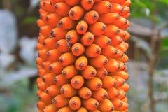 Flora en Thaïlande Photographie stock