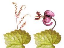 Flora encantadora del resorte Imágenes de archivo libres de regalías