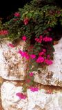 Flora exótica fotos de stock
