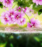 Flora exotic  background Royalty Free Stock Images