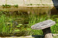 Flora för gräsplan för vattenströmflöde på näckrosbladet Royaltyfria Foton