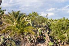 Flora för ointressant klimat Arkivbilder