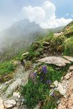 Flora of the fagaras mountain. Flowers among the grass on the edge of a steep rocky slope. foggy weather with cloudy sky on the background stock photos