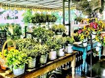 Flora Farms Herb Display stock image