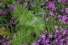 Flora and fauna Stock Photos