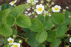 Flora and fauna Stock Images