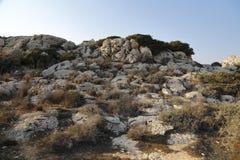 The flora and fauna of the Mediterranean coast Stock Photos