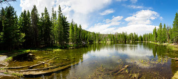 Flora and fauna of Rocky Mountain National Park Stock Images