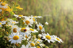 Flora and fauna in the summer Stock Photos
