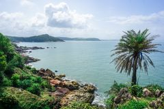 Flora and fauna of the tropical peninsula in the jungle. Gokarna Village, India royalty free stock image