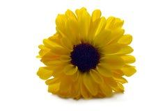 Flora - flor amarilla Imagen de archivo libre de regalías