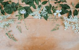 Flora, Flower, Branch, Flower Arranging Royalty Free Stock Photography