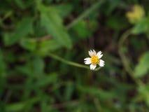 Flora Flower indesiderata Immagini Stock