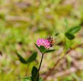 Flora, Flower, Nectar, Pollinator Royalty Free Stock Photo