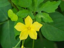 Flora Flower non désirée jaune Photographie stock