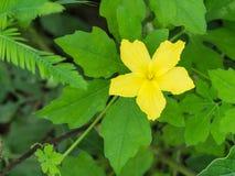 Flora Flower non désirée jaune Photos libres de droits
