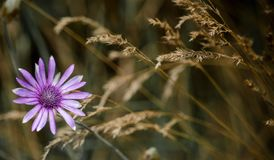 Flora, Flower, Plant, Close Up Royalty Free Stock Images