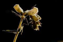 Flora, Flower, Plant, Macro Photography