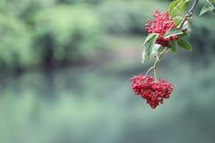 Flora, Flower, Plant, Spring Stock Image