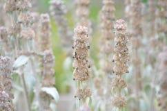 Flora, Flower, Spring, Plant Stem Stock Image