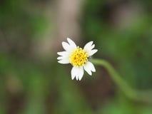 Flora Flowers Blooming non désirée Photos libres de droits