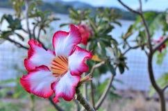 Flora fresca naturale in giardino Immagini Stock Libere da Diritti