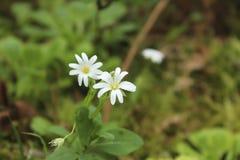 Flora of Galicia. Flora of atlantic rain forest Stock Image