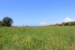 Flora of Galiicia. Countryi in seaside, Enjoying spring Stock Image