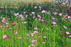 Flora garden. Various flora garden as background royalty free stock photography