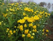 Flora garden. Stock Photography