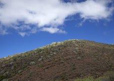Flora of Gran Canaria - Euphorbia canariensis Royalty Free Stock Images