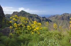 Flora of Gran Canaria Royalty Free Stock Photos