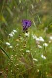 Flora of Gran Canaria Stock Images