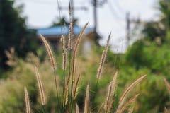 Flora Grasses Royaltyfria Bilder