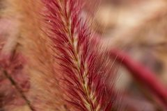 Flora Grasses no jardim fotos de stock