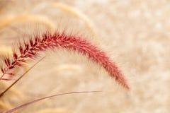 Flora Grasses no jardim imagem de stock royalty free