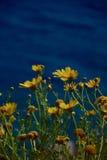Flora griega Imágenes de archivo libres de regalías