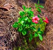 Flora Growing através das rochas, Kauai, Havaí, EUA foto de stock royalty free