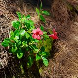 Flora Growing através das rochas, Kauai, Havaí, EUA imagem de stock royalty free