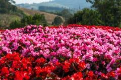 Flora hermosa Fotografía de archivo libre de regalías