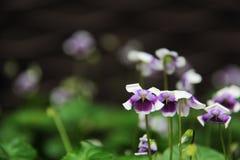 Flora hermosa de las flores Fotografía de archivo