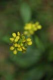 Flora hermosa de las flores Imagenes de archivo