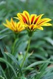 Flora hermosa de las flores Fotos de archivo libres de regalías