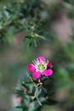 Flora hermosa de las flores Imagen de archivo