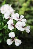 Flora hermosa de las flores Foto de archivo