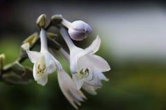 Flora hermosa de las flores Foto de archivo libre de regalías