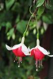 Flora hermosa de las flores Fotos de archivo