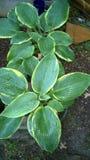 Flora in het Oosten Texas Hasta 001 royalty-vrije stock fotografie